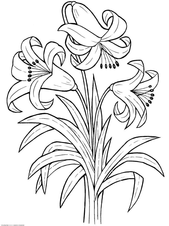 Снг, раскраска открытка цветы