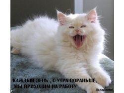 Фото животных прикольные