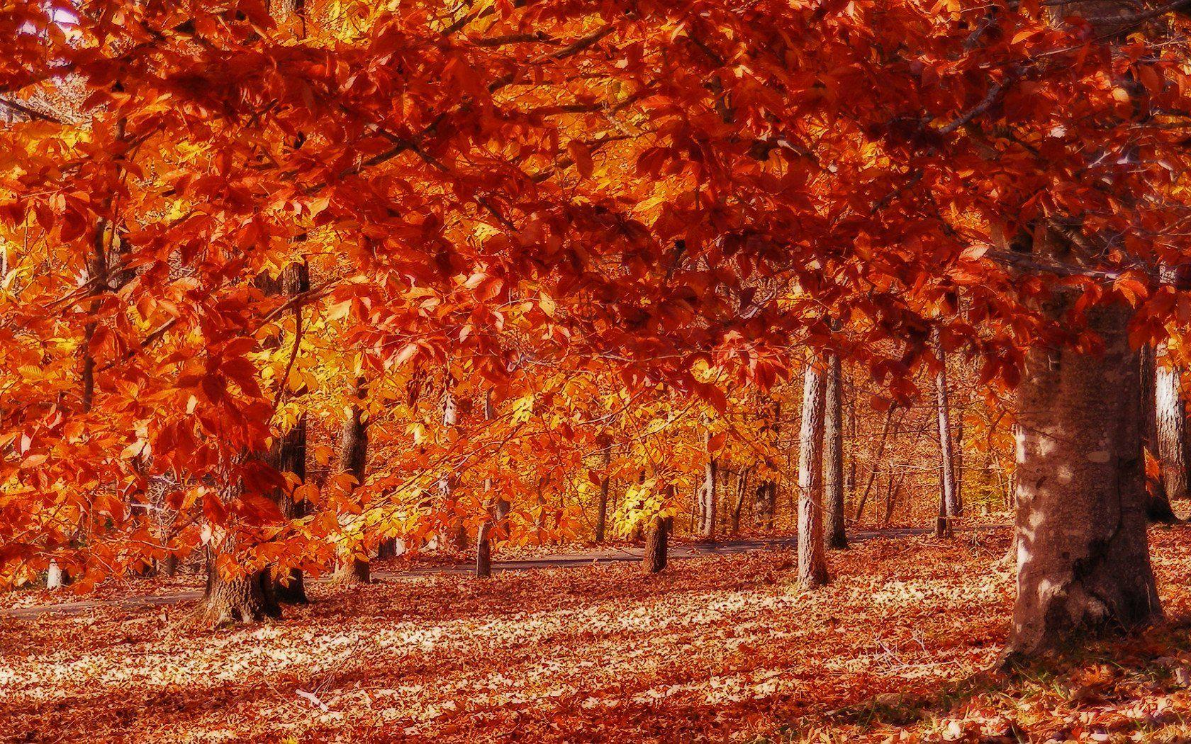 фото осень золотая хорошем качестве неравных