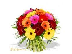 Герберы фото цветы