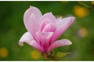 Цветы фото хорошего качества
