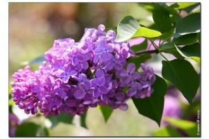 Фото цветы высокого качества