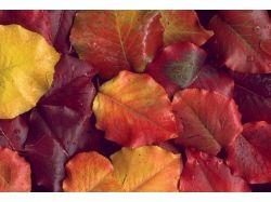 Осень картинки листья