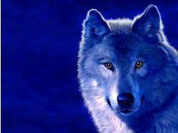 Картинки волки красивые