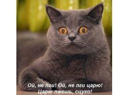 Прикольные картинки коты