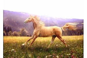 Картинки фэнтези лошади