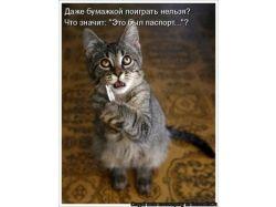 Коты прикольные картинки
