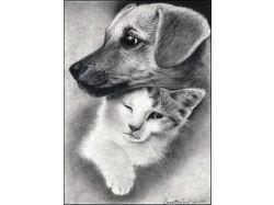 Картинки животные карандашом 2