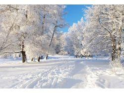 На рабочий стол фото зима