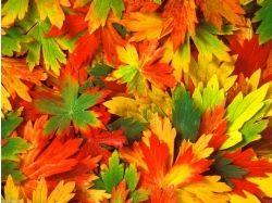 Осенняя природа картинки