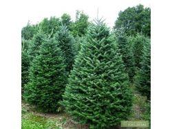 Новогодние фото елки