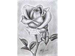 Нарисованные картинки карандашом легкие и красивые