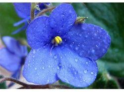 Цветы фото фиалки