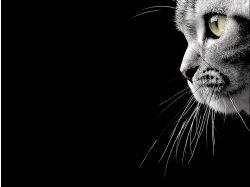 Красивые котики картинки
