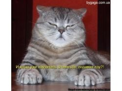 Прикольные фото с котами