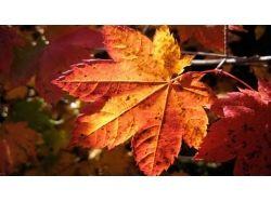 Осень макро