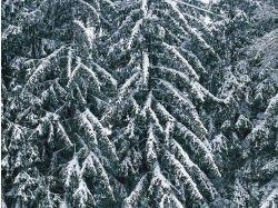 Красивые фото зима фото 5