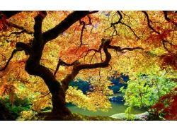 Пейзаж осень фото