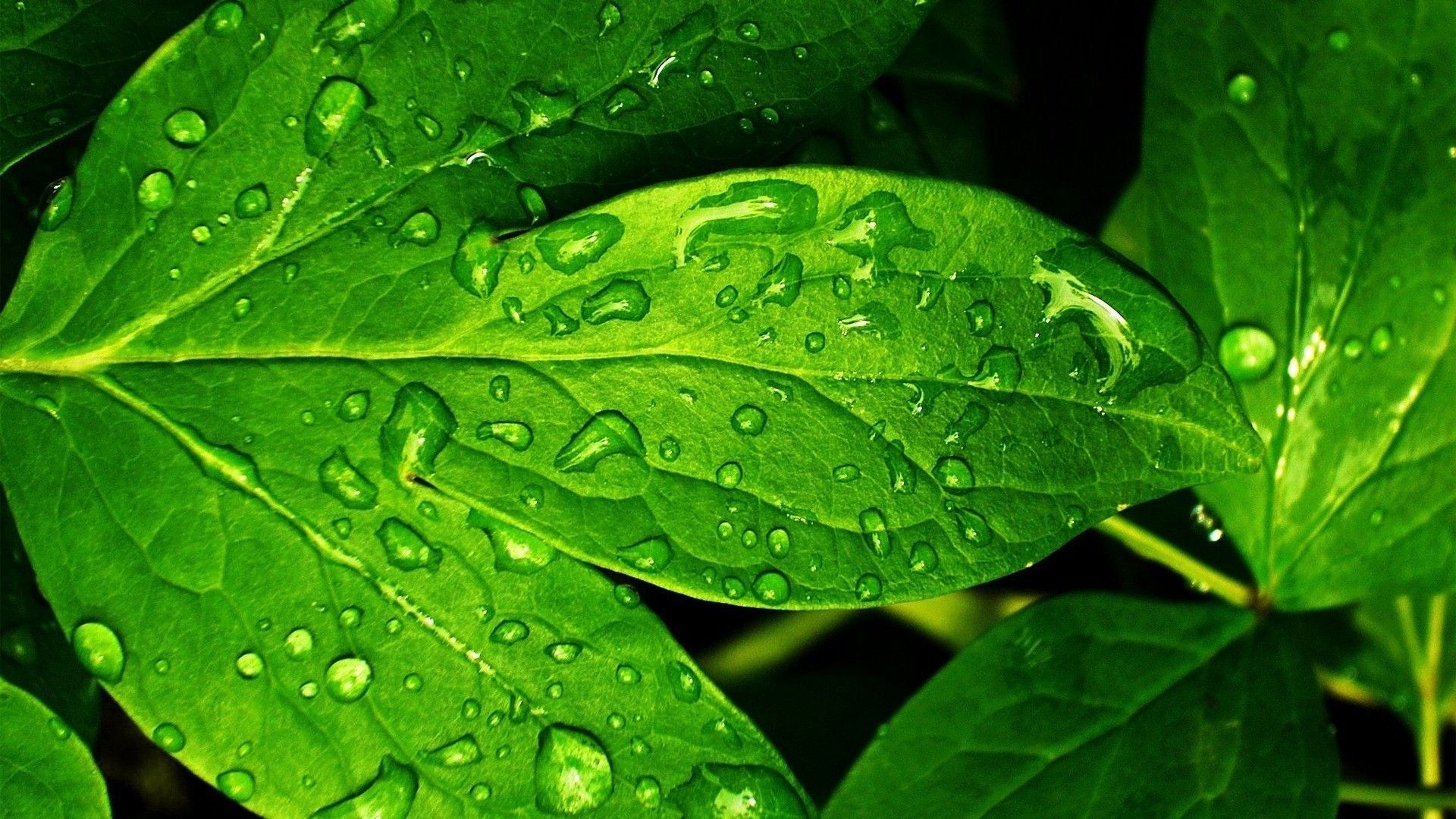 Ярко-зеленый свет смотреть