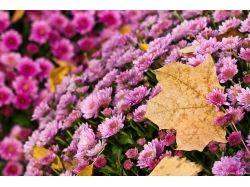 Картинки цветы осени