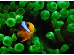 Картинки подводный мир океана