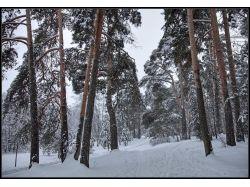 Фото зима в лесу