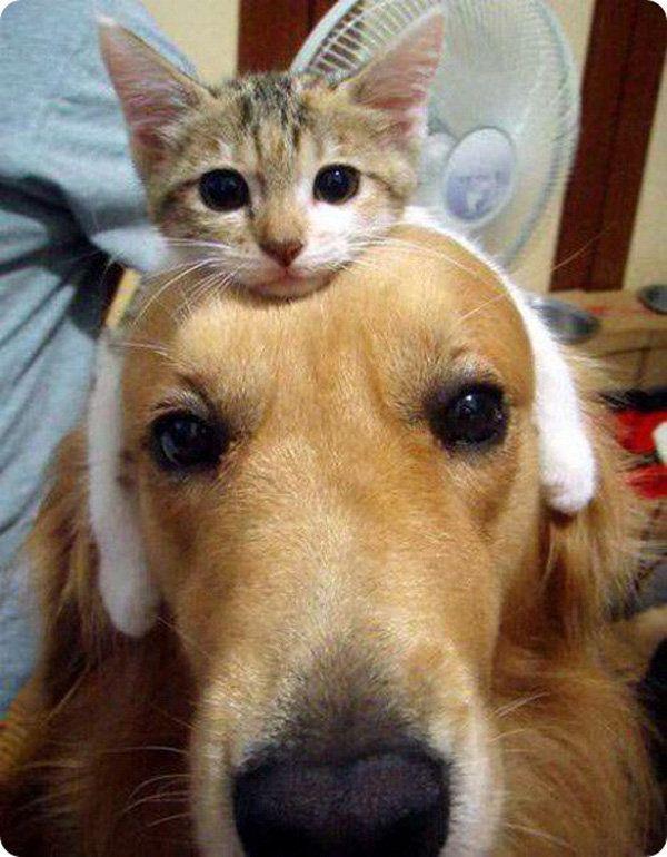 Фото кошек и собак прикольные