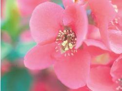 Картинки цветы смотреть бесплатно