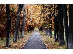 Осень москва фото