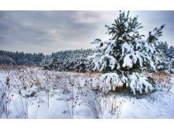 Фото зима елка
