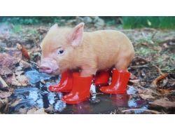 Фото прикольные свиней 5