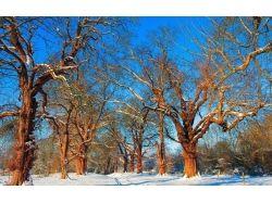 Декоративные картинки зима 1