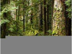 Леса картинки