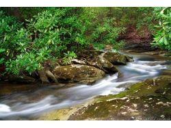 Леса картинки 3