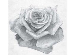 Природа рисунок карандашом 5
