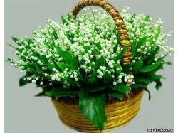 Цветы любовь картинки 6