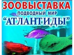 Конкурс подводный мир для детей