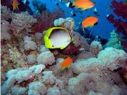 Моря подводный мир 6