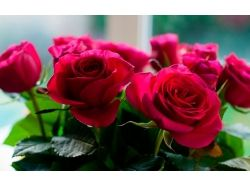 Новые картинки цветы 5