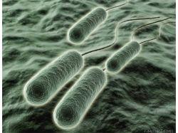 Бактериологическое оружие картинки фотографии 1