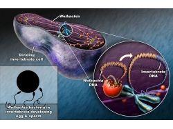 Бактериологическое оружие картинки фотографии 2