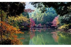 Природа японии картинки