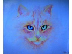 Рисунки котов карандашом 5