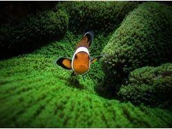Картинки водоросли 2