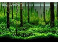 Картинки водоросли 4