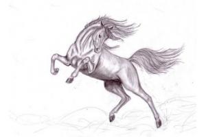 Рисунки в карандаше легкие