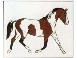 Конный спорт фото красивых лошадей 1