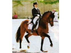 Конный спорт фото красивых лошадей 3