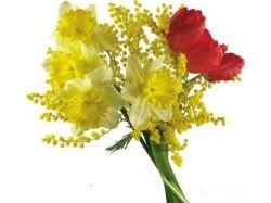 Цветок мимоза фото 3