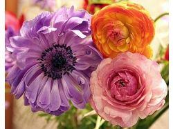 Цветы фото лютики 3